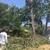 Tenorio Tree Service