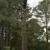Arbor Quality Tree