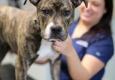 Rye Harrison Veterinary Hospital - Rye, NY