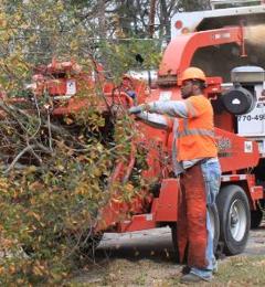 Casey Tree Experts Inc - Atlanta, GA