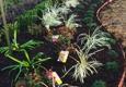 Green Thumb Nursery  & Landscaping - Beaumont, TX