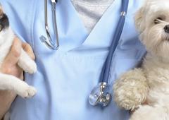 Babcock Hills Veterinary Hospital - San Antonio, TX