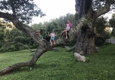 A Discount Tree Service - Windsor, CT. Our 3 little monkeys, large oak in Granby.  Truly amazing tree!