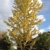 A  Cut Above Tree