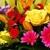 Lou Gentile's Flower Basket