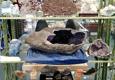 Crystal Cave Rock & Gem Shop - Davie, FL