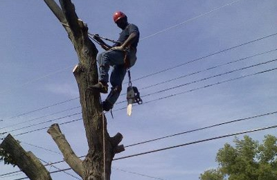 Wilson Tree Service - East Alton, IL