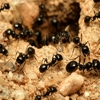 American Termite and Pest Control