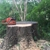 Snapping Turtle Tree Works LLC