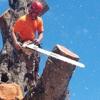 Climb High Tree Care