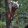 A 1 Tree Service - CLOSED