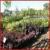 Creekside Garden Center and Nursery