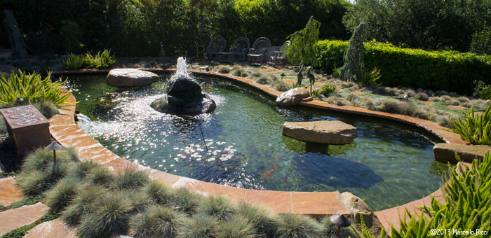 The coral abyss 610 california ave rochester pa 15074 for Koi pool opening times