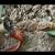 GR Plumbing & Rooter