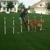 Good Behavior Dog Training