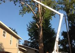 Tim The Tree Man - Nevada City, CA