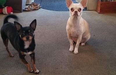 Blue Angel Pet Salon & Day Care 1295 Dog Track Rd, Pensacola