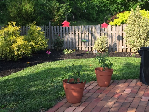 September can be a great time to put your green thumb to work.