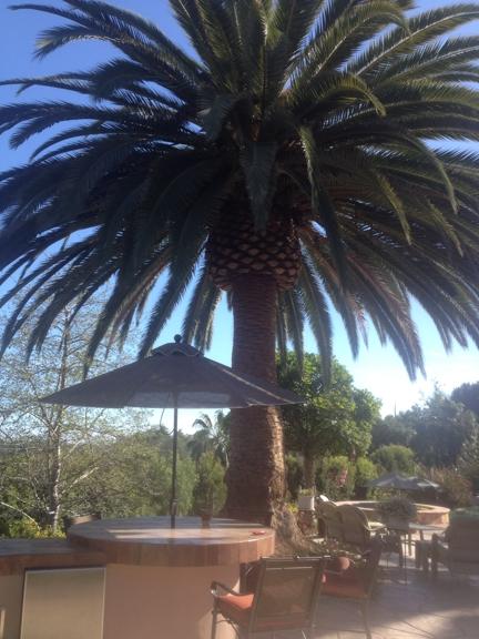 Cesareo Tree Service - Oceanside, CA
