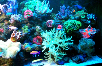Living Reef Aquariums - Oakland Park, FL