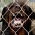 Rob's Guard Dog Rental and Sales