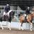 Matthias Arabians