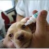 Menifee Valley Animal Clinic