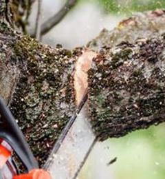 Stevens' Tree Service, LLC - Cape Girardeau, MO
