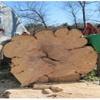 Copp Tree Company
