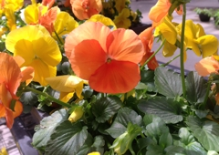 Dan Schantz Greenhouse & Cut Flower Outlet - Allentown, PA