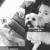 Smoothie Poochie Pet Salon