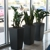 Tropical Gardens Interiorscaping, Plant Rental and Maintenance