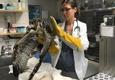 Grafton Animal Hospital - Yorktown, VA. Grafton Animal Hospital does a lot of work for local wildlife