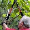 Dart Tree Service
