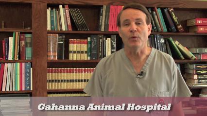Gahanna Animal Hospital - Columbus, OH